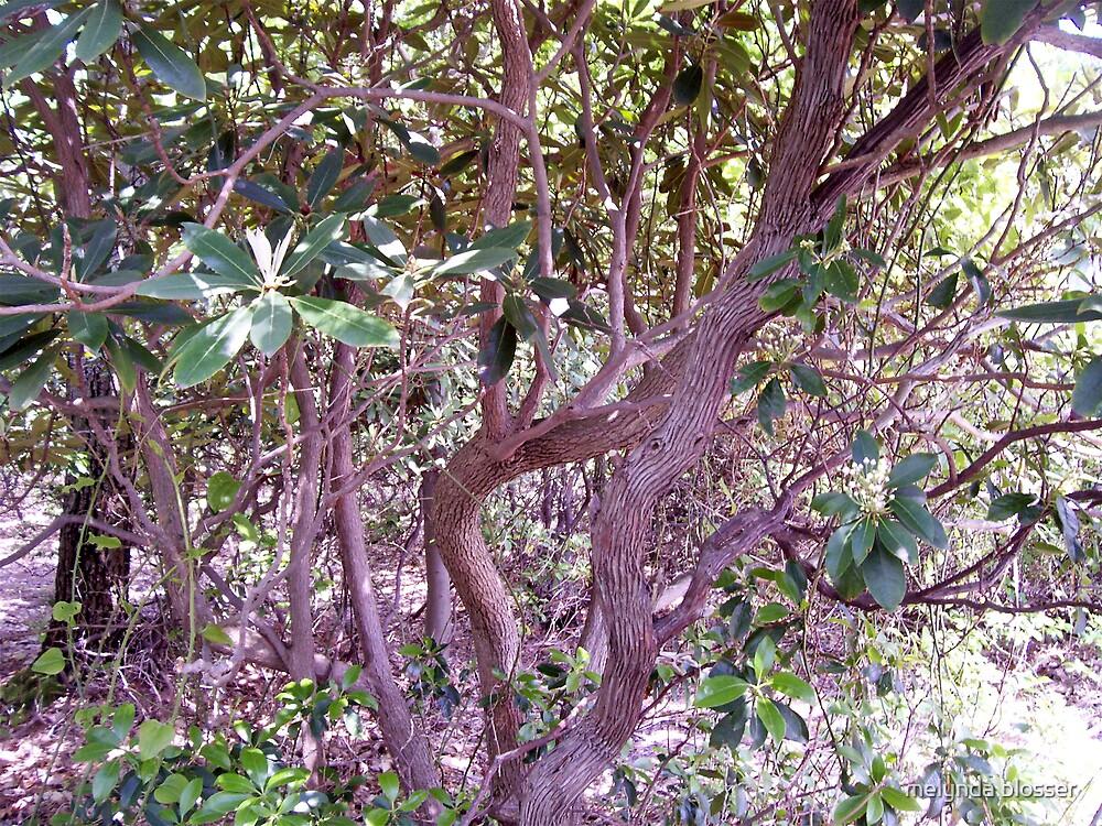 trees by melynda blosser