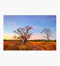 Boab Sunset Photographic Print