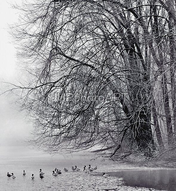 Foggy Lake by JHRphotoART