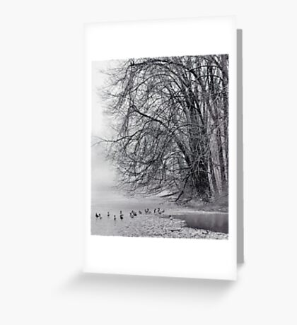 Foggy Lake Greeting Card