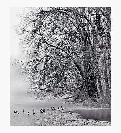 Foggy Lake Photographic Print