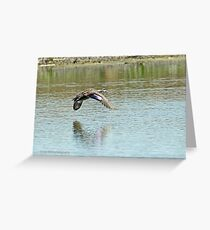 Pacific Black Duck (392) Greeting Card