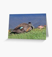 Pacific Black Duck (544) Greeting Card
