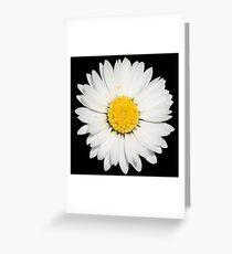 Top View of a White Common Daisy Isolated on Black Greeting Card