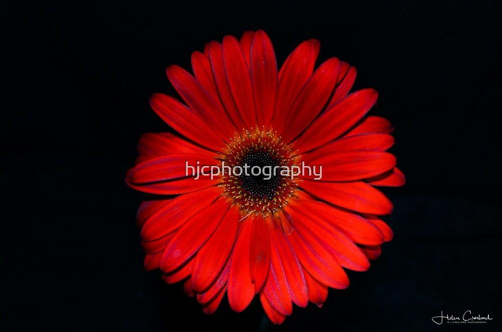 Red Velvet by hjcphotography