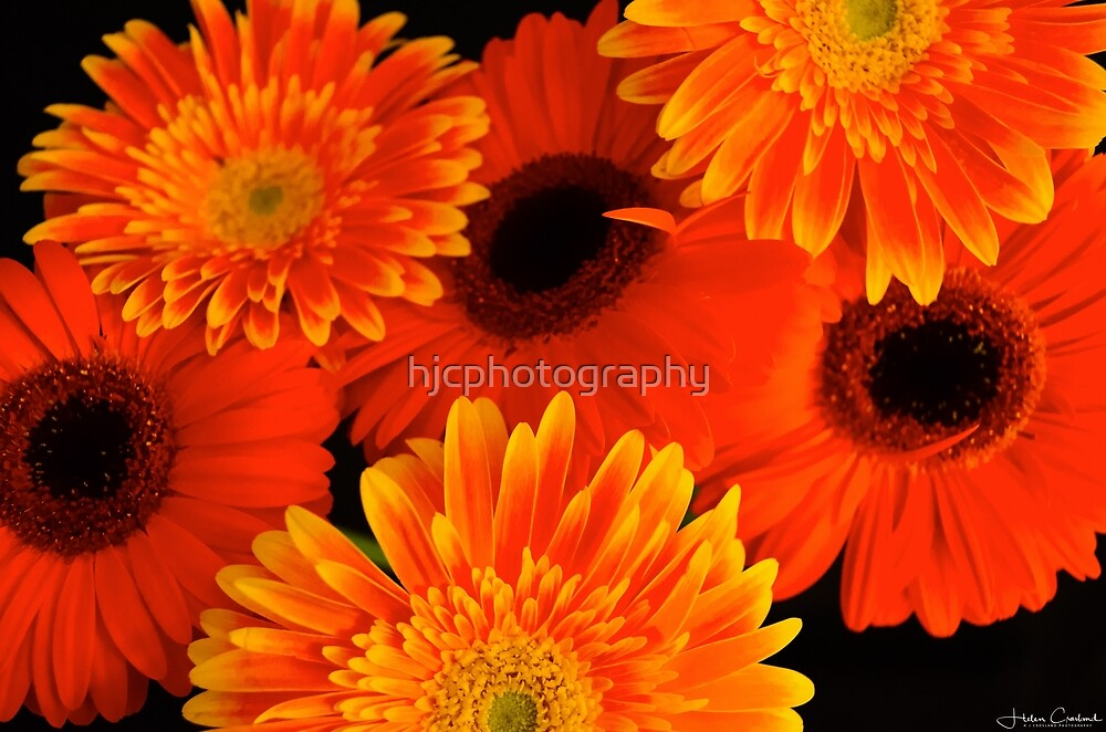 Orange is the new Black! by hjcphotography