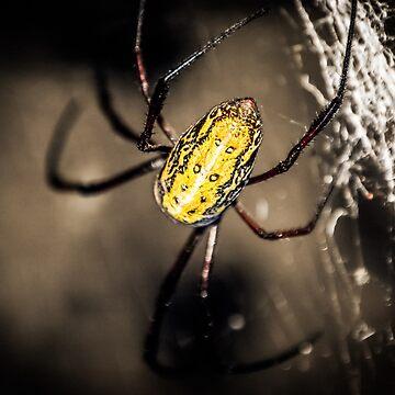 spider by Ismart