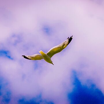 seagull by Ismart