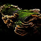 Tarkine Fungi 1 by Andrew Smyth
