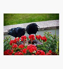 Sing along with the chorus - We belong together ..... Photographic Print