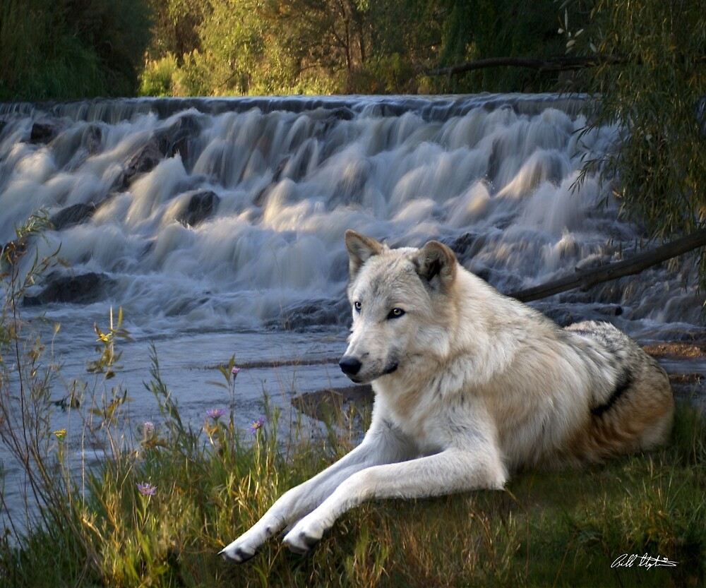 Wolf Falls by Bill Stephens