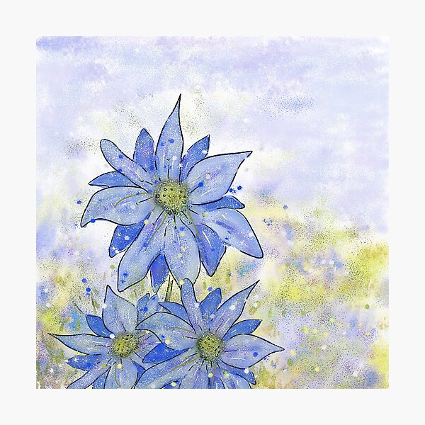 Blue Flower Design:Love-in-a-Mist Meadow Photographic Print
