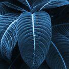 Leaf me alone 01 von froileinjuno