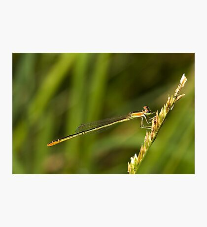 Damsel Photographic Print