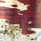 Birch bark by VanOostrum