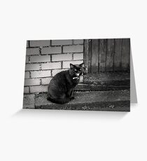 Black Cat Saying Hello Greeting Card