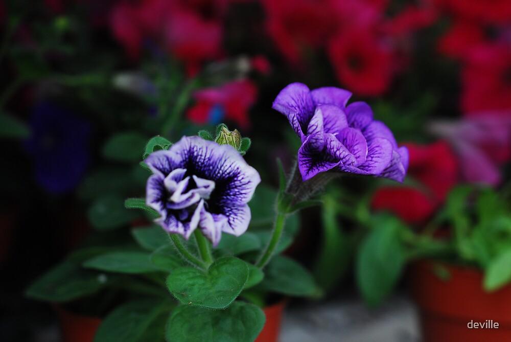 The Colour Purple by deville