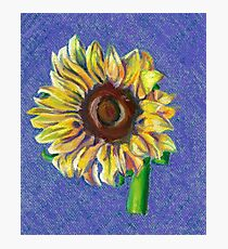 Yellow Sunflower on Blue- Oil Pastel Art - Floral Art Photographic Print