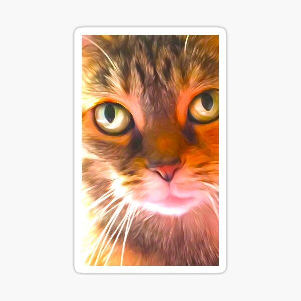Looking Cat Sticker