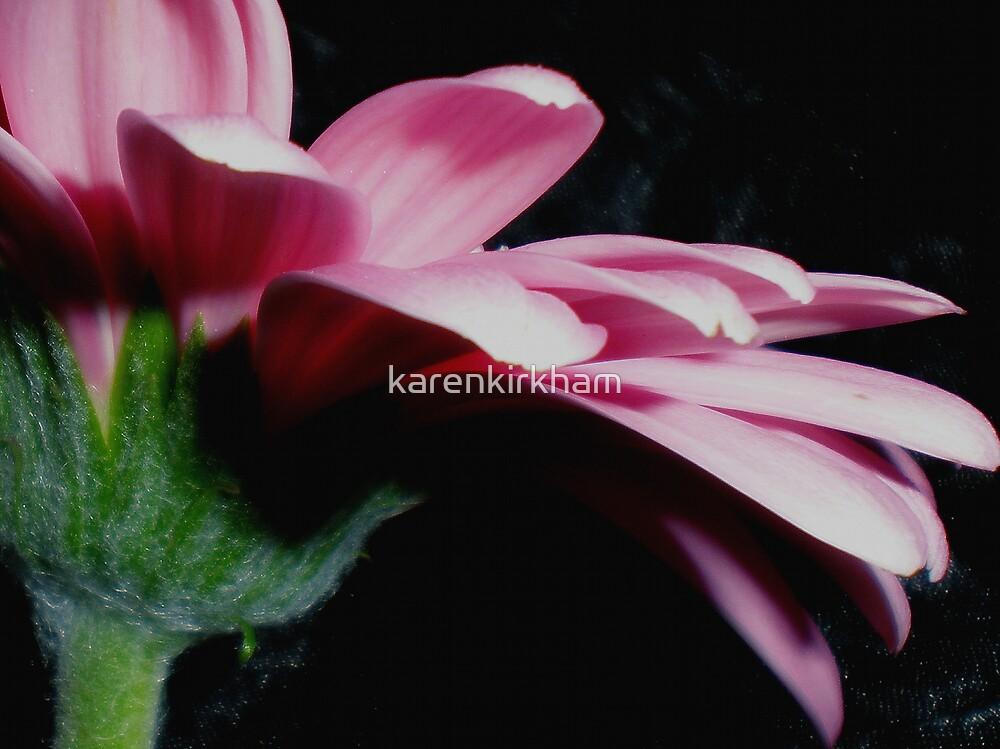 Petals Pink by karenkirkham