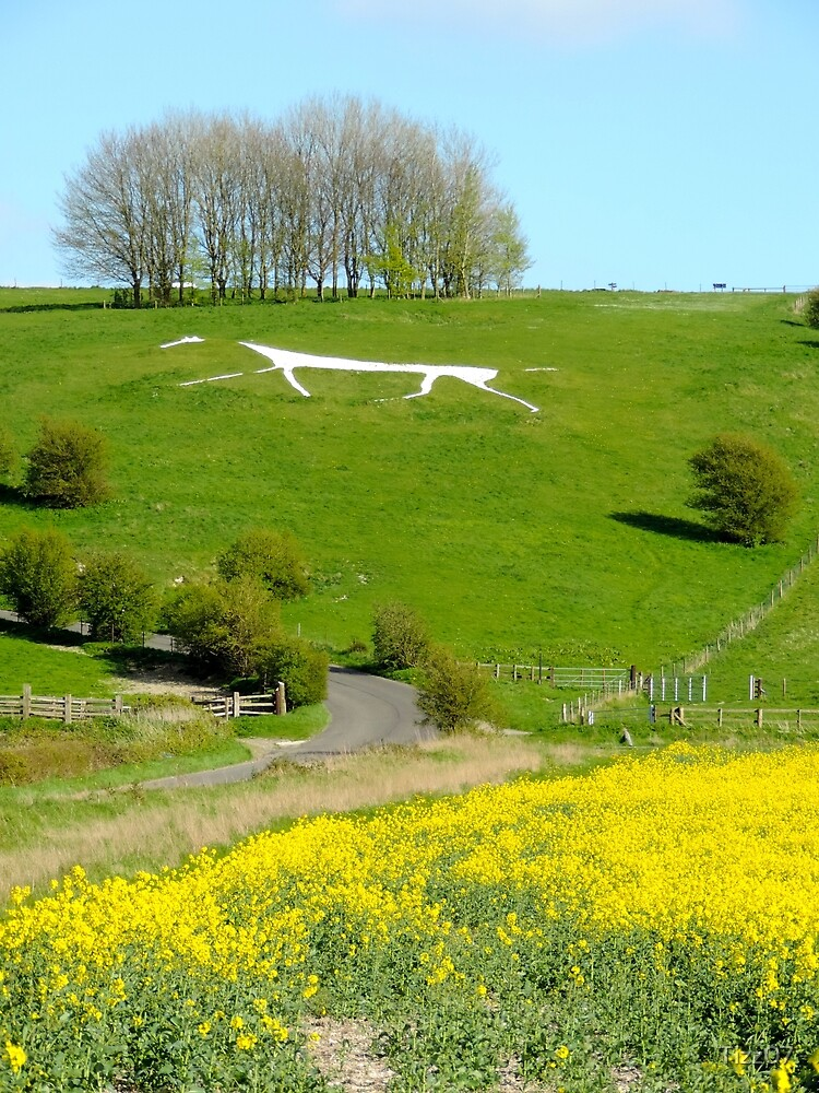Hackpen White Horse (Wiltshire) by Tizz07