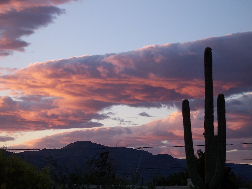 saguaro and the sunset by Ryan Oughtersn
