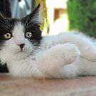 Kitten by Toni Kane