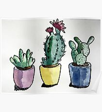 Succulent Watercolour  Poster