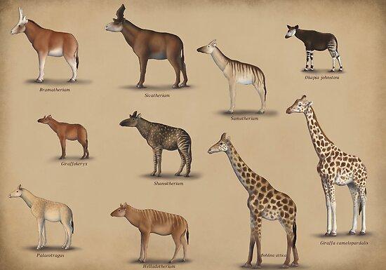 Giraffidae Giraffe Okapi And Their Extinct Relatives Posters By