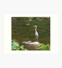Blue Heron Resting Near The Creek Art Print