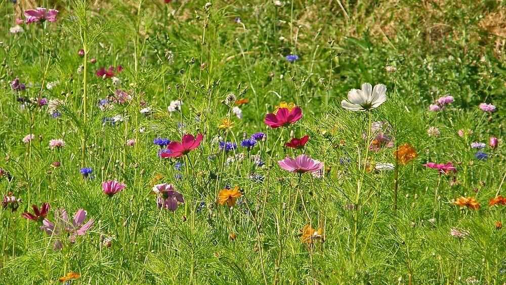 Wildflowers by Catherine Beldon