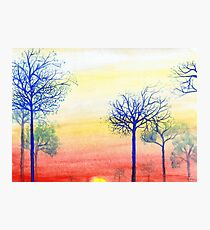 Sunset with Blue Trees Photographic Print