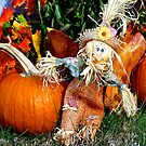 Cute little scarecrow with pumpkins by Beth Brightman