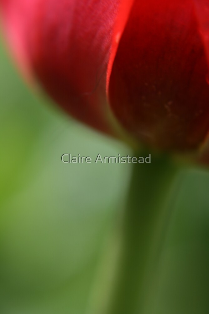 Irresistible love by Claire Armistead
