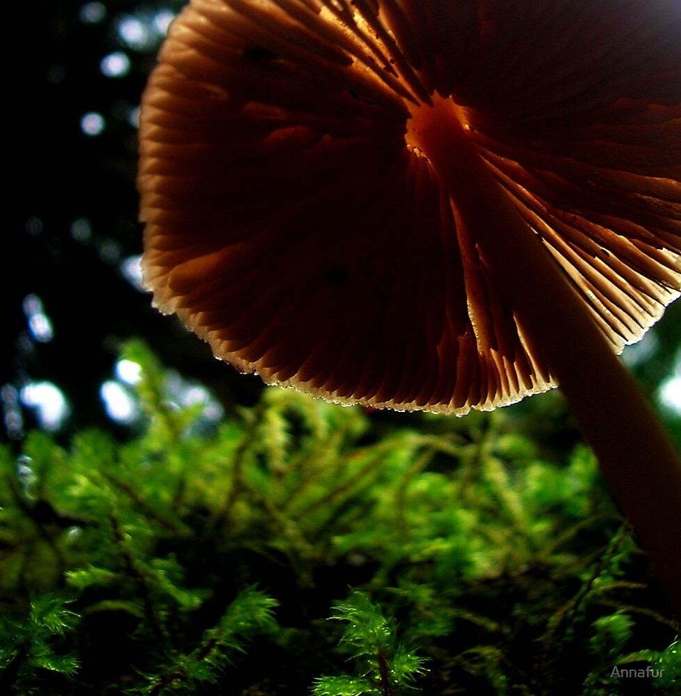 Mushroom  by Annafur