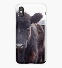 Brown Cow  iPhone Case/Skin