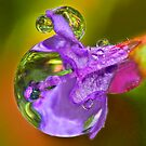 Dove Droplets ! by robkal