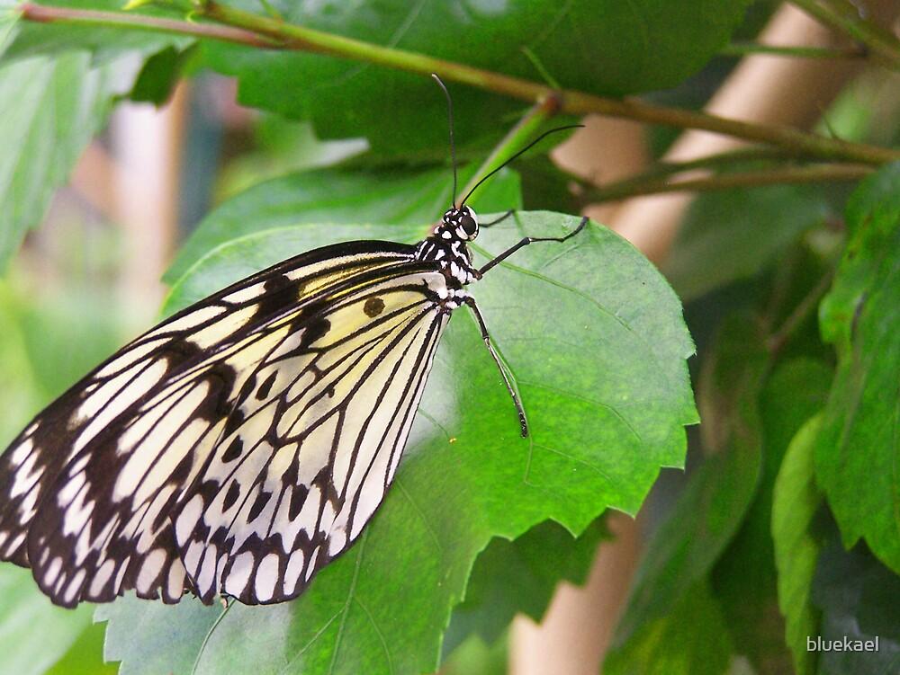butterfly 2 by bluekael