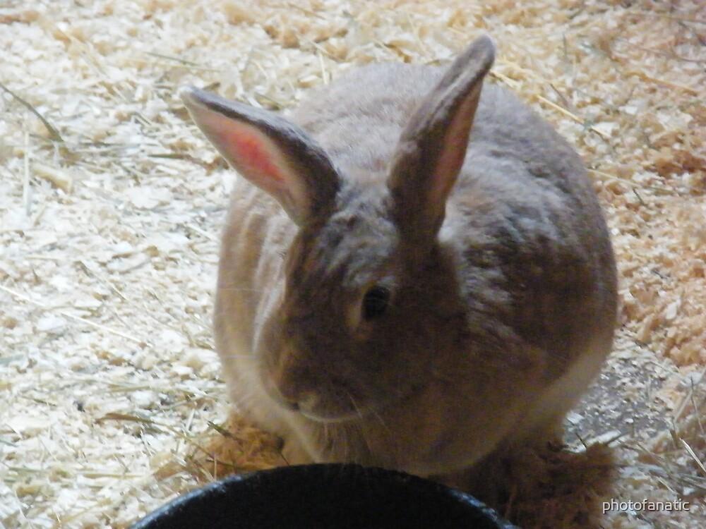 bunny by photofanatic