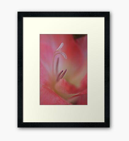 Gladiola Heart Framed Print