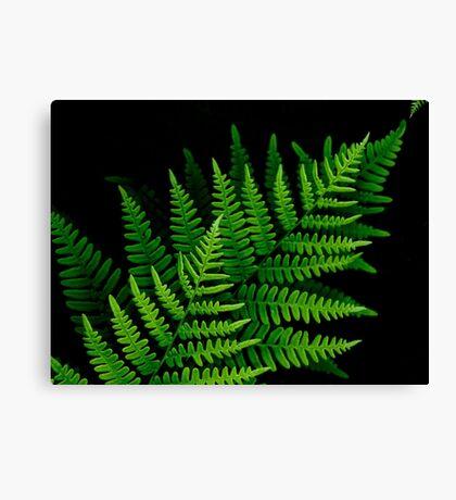 fantastic fern fronds Canvas Print