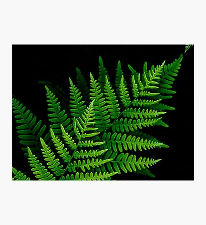 fantastic fern fronds Photographic Print