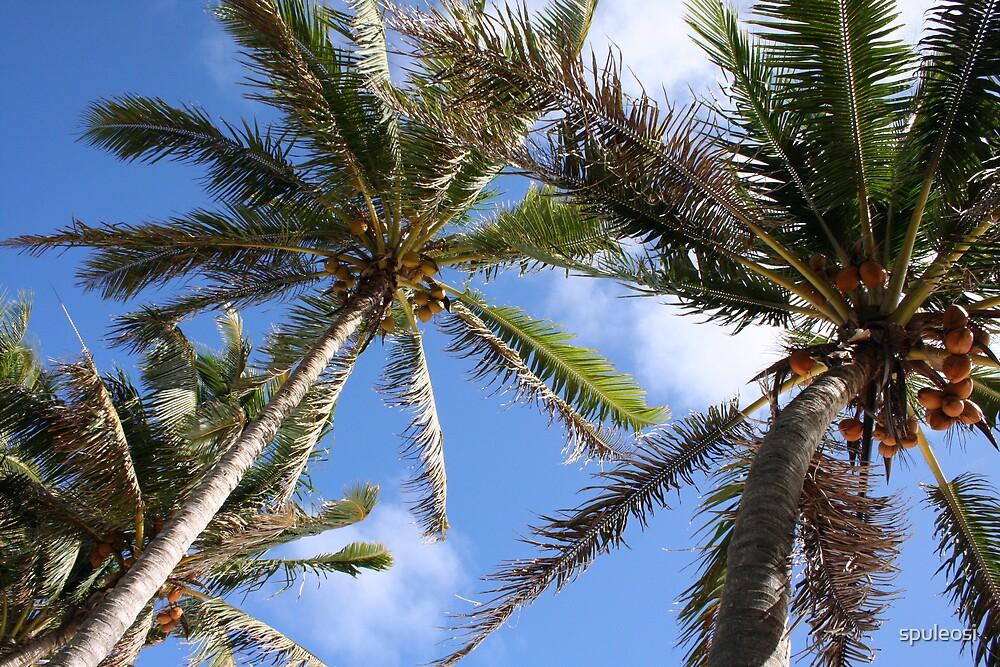 Coconut Palms of Rarotonga,Cook Islands by spuleosi