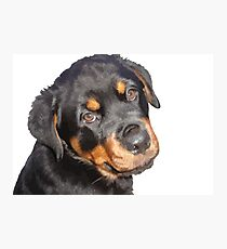 Female Rottweiler Puppy Making Eye Contact Vector  Photographic Print
