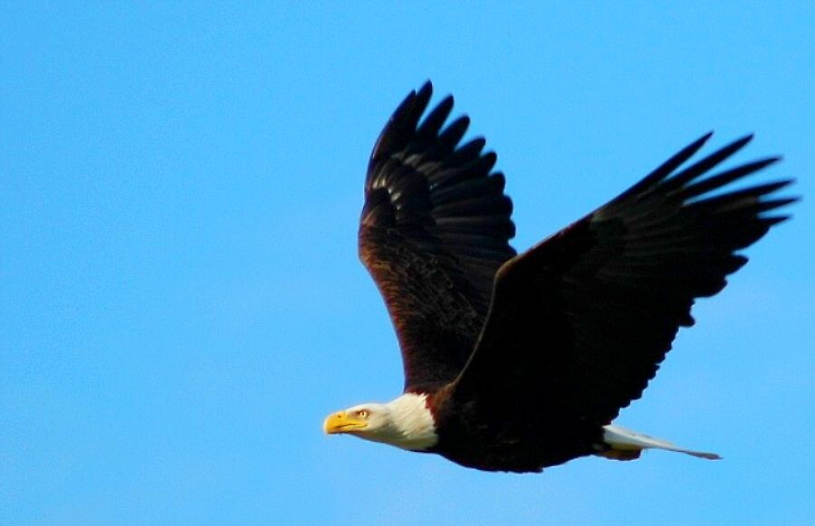 eagle by clare scott