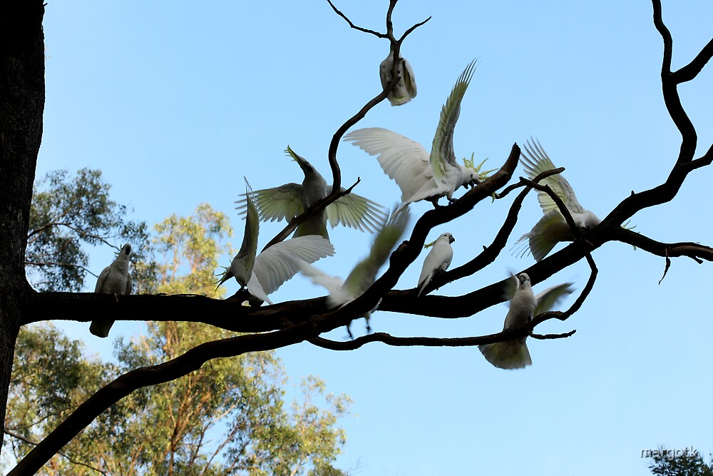 Cavorting Cockatoos by margotk