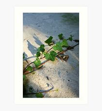 Ivy in abandoned guesthouse Art Print