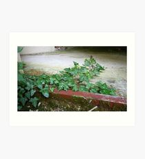Ivy in abandoned guesthouse 2 Art Print