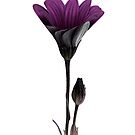 purple pillar ... by SNAPPYDAVE