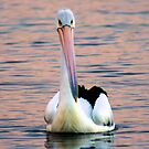 Pelican by Nathan  Johnson